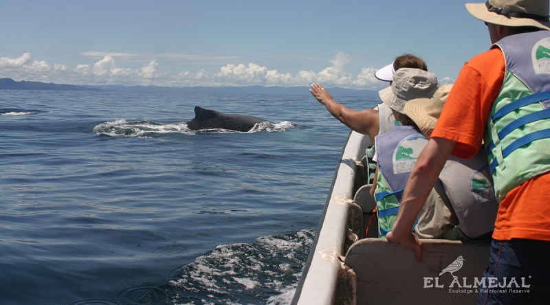 Ballenas a la vista Bahía Solano 5N 3