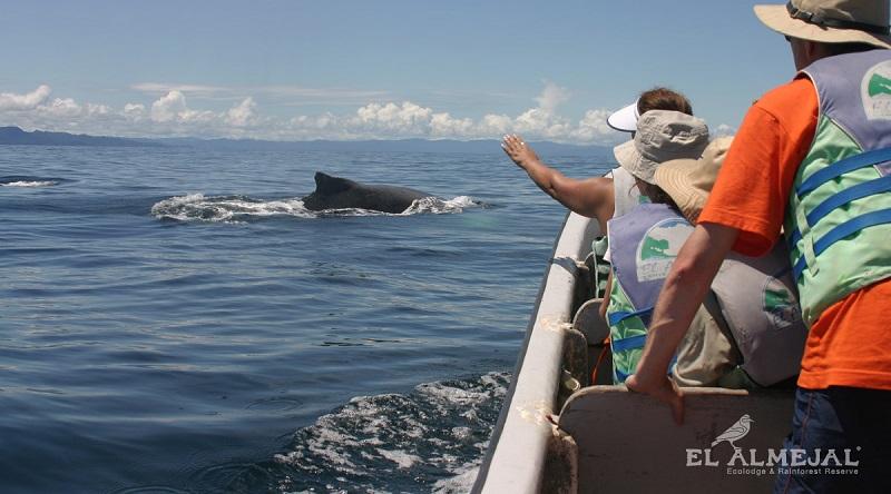 Ballenas a la vista Bahía Solano 4N 3