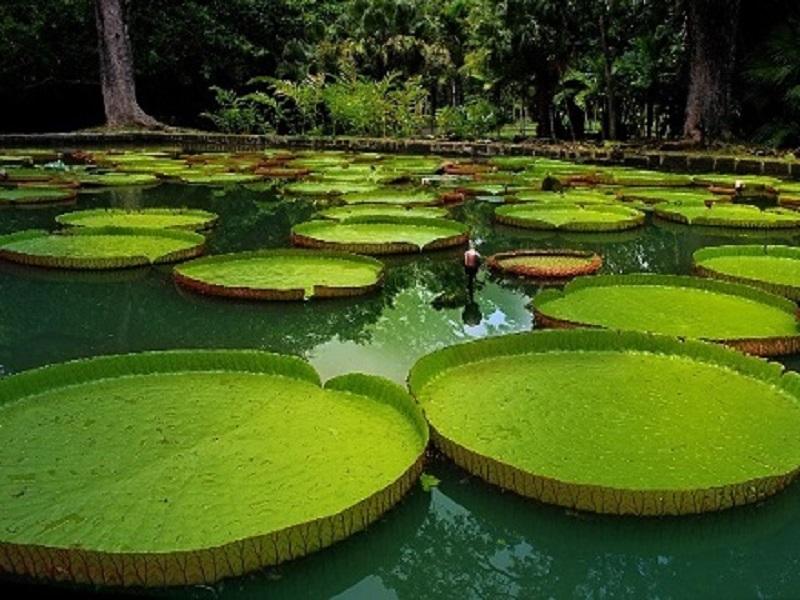Conociendo el Amazonas 4
