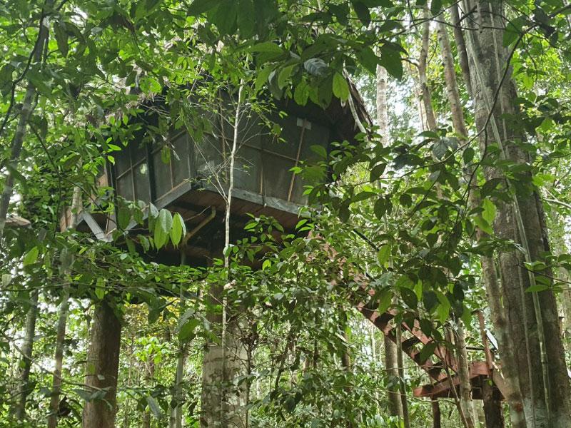 Experiencia Amazonas 6
