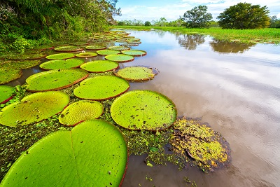 Conociendo el Amazonas 5